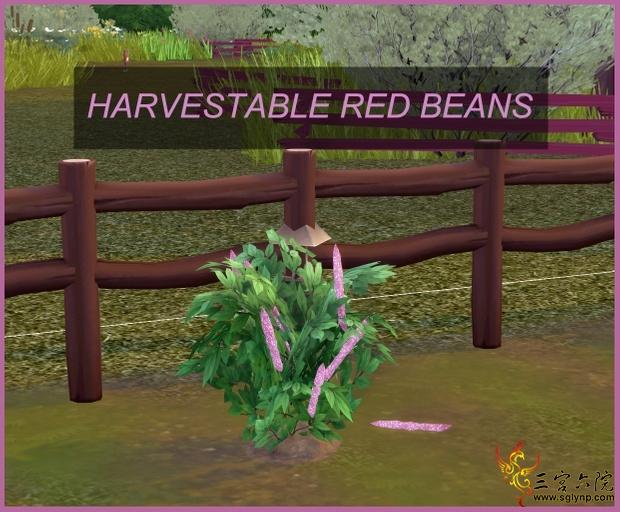 红豆.jpg