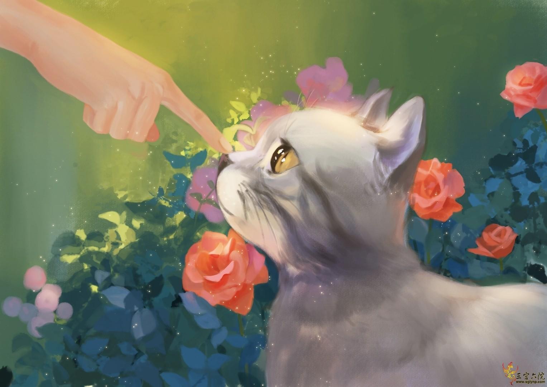 猫猫的副本.jpg