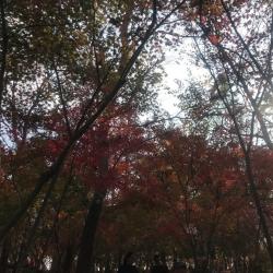 【蜜戀活動 】——庭前木叶半青黄